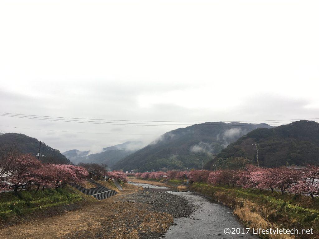 役場近辺の桜並木