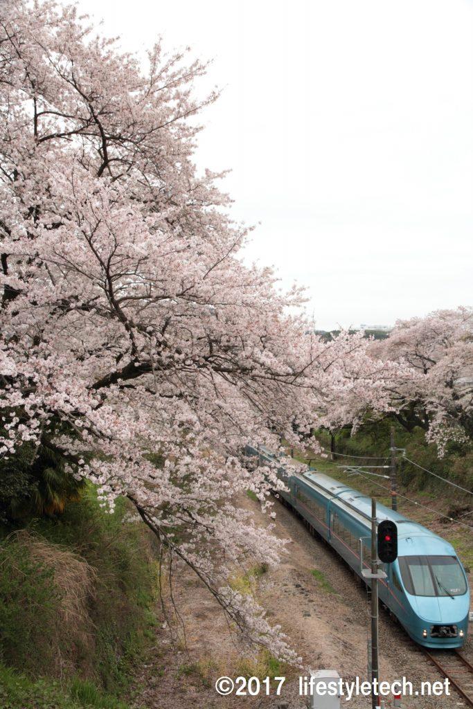 桜並木とロマンスカー